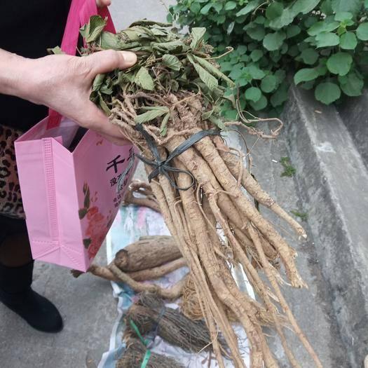 廣西壯族自治區柳州市魚峰區 深山野生千斤拔