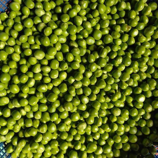 四川省涼山彝族自治州西昌市 手工現剝豌豆米,有需要的小伙伴需提前24小時預定。