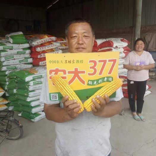 河南省安陽市滑縣農大377 自交系 ≥99%