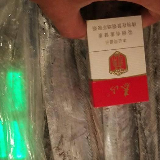 山東省濰坊市奎文區南美帶魚 廠家直銷