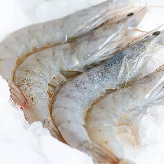江蘇省連云港市贛榆區 超大蝦鮮活海鮮水產活蝦基圍蝦凍蝦青島對蝦海蝦青蝦鮮活速凍批發
