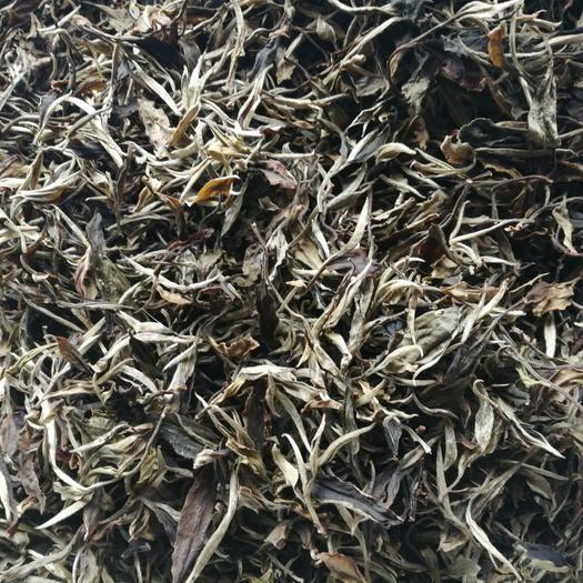 云南省文山壯族苗族自治州馬關縣 普洱老樹茶