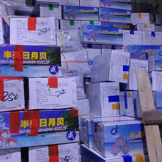 廣西壯族自治區北海市海城區飛螺 日月貝不發快遞,不包運費。