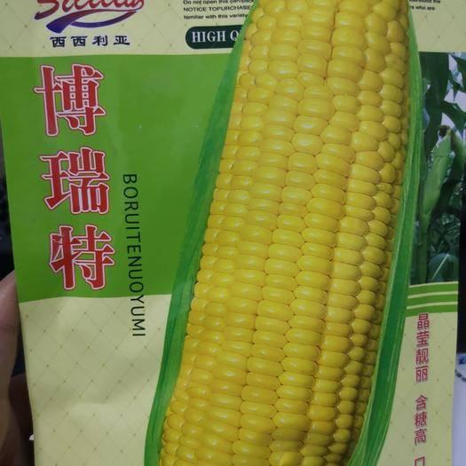 河南省鄭州市二七區 黃色水果玉米種子 晶瑩靚麗 含糖高 口感佳 味甜可口皮薄無渣