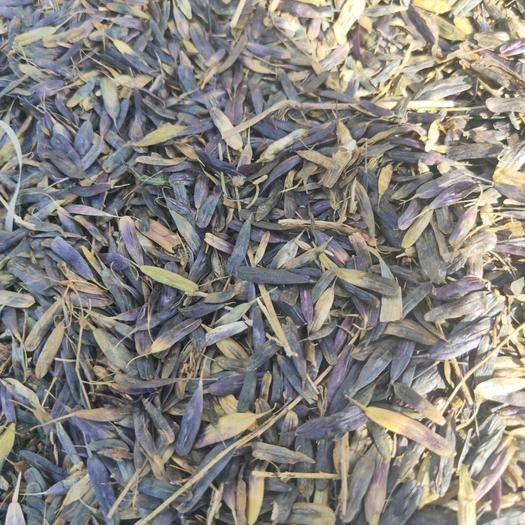 陜西省商洛市商州區板藍根種子