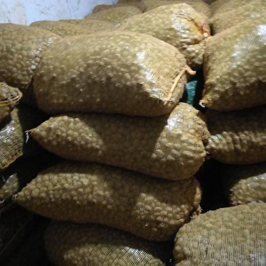 云南省昭通市魯甸縣魔芋種 出售一代種二代種