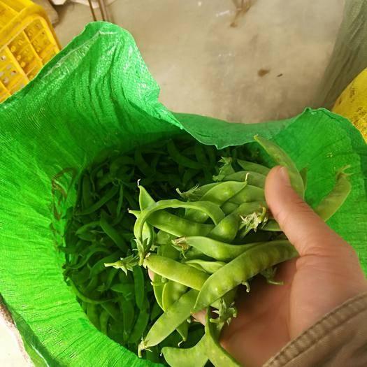 廣西壯族自治區南寧市橫縣 荷蘭豆開始上市