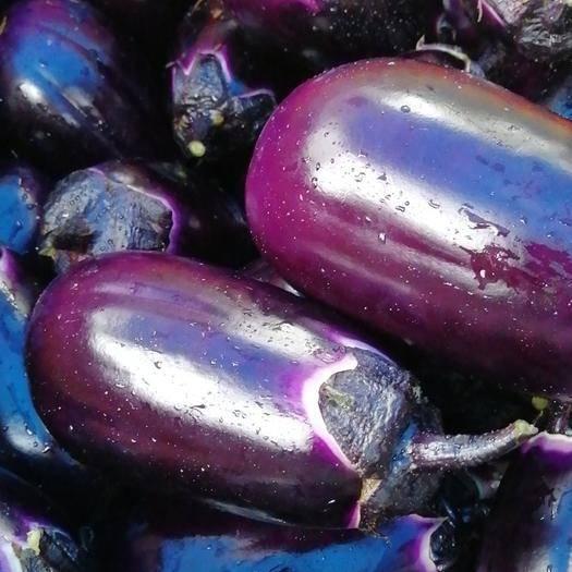 廣東省廣州市白云區紫光圓茄 產地直供紫圓茄
