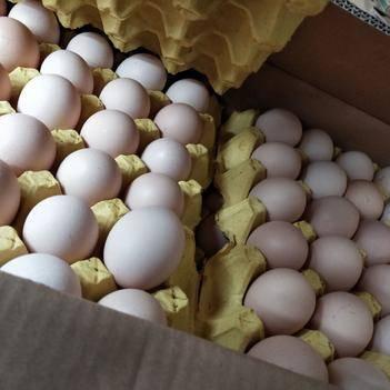 24斤大白蛋