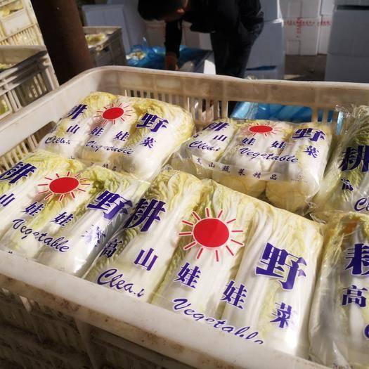 河南省安陽市內黃縣小娃娃菜 3~4兩以上