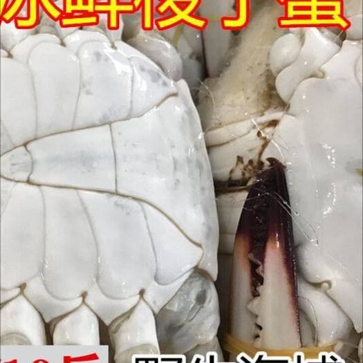 江蘇省鹽城市亭湖區梭子蟹 10斤/箱 6-9兩/只!順豐包郵! 新鮮鮮活速凍大螃蟹冰凍
