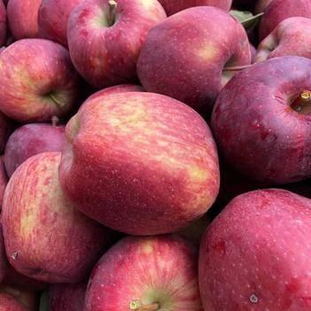 天山雪水灌溉的蘋果,晝夜溫差大,甜度高、香味濃、香味濃口感好
