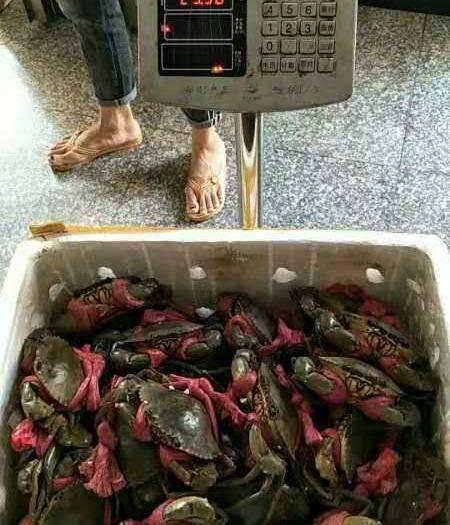 廣西壯族自治區防城港市東興市 大青蟹批發