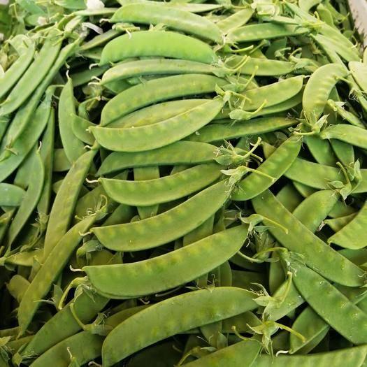 云南省玉溪市峨山彝族自治縣莢豆 有冷庫老板看上的嗎