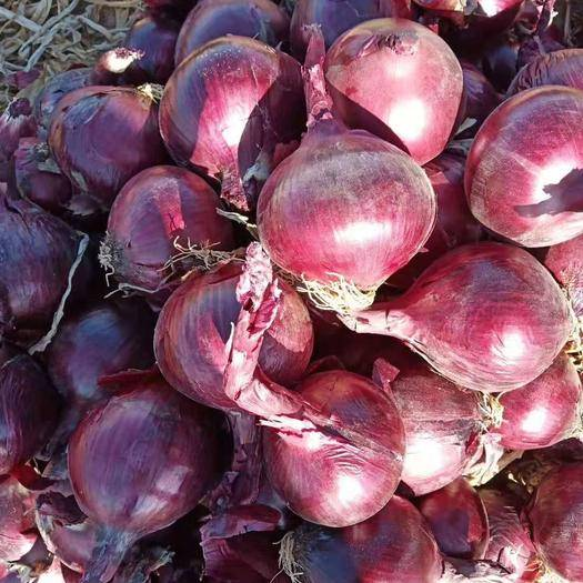 陜西省榆林市定邊縣 紅皮洋蔥