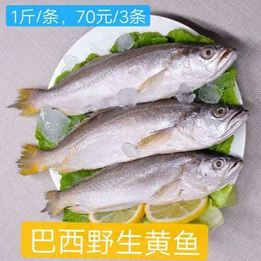 重慶市渝北區 巴西野生黃魚
