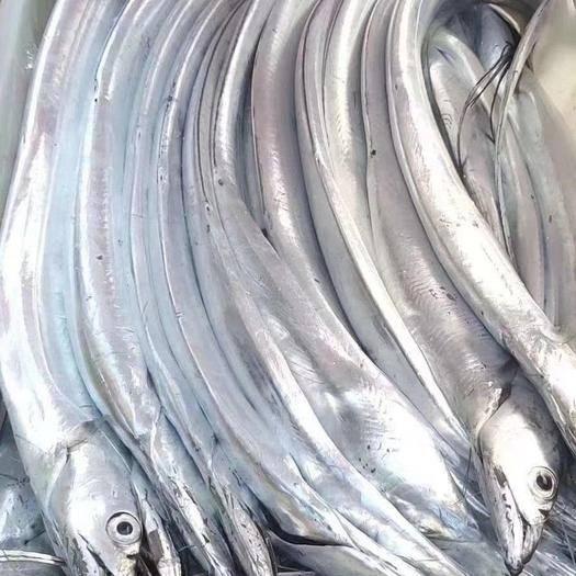 河北省張家口市萬全區 保證舟山帶魚,一手貨源,誠信經營。