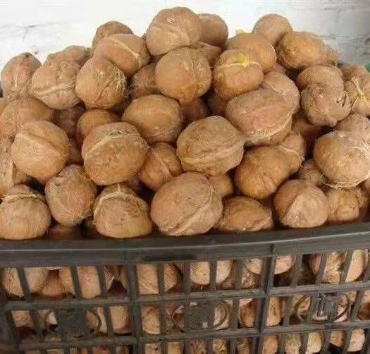 山西省忻州市原平市 汾陽薄皮老樹棉核桃壞果2%農戶無票白荒山荒坡長的大樹核桃。