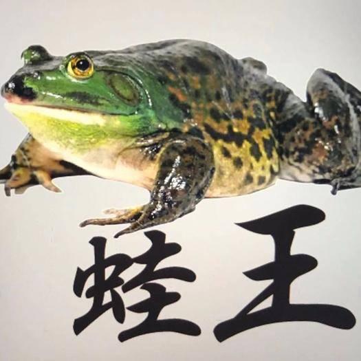 湖南省衡陽市蒸湘區牛蛙 養殖基地一手貨源,廠家直銷,質優價美
