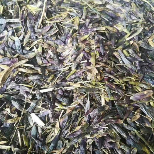 陜西省西安市臨潼區 板藍根種子