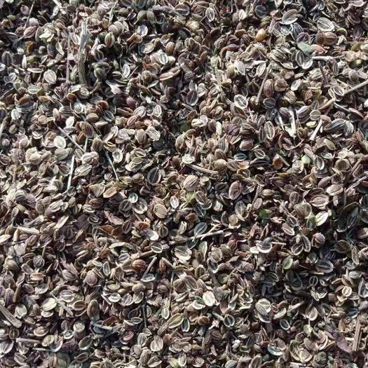 山東省濟寧市金鄉縣白花前胡種子 兩年的前胡種子產新了。有需要的老板聯系!質優價廉!