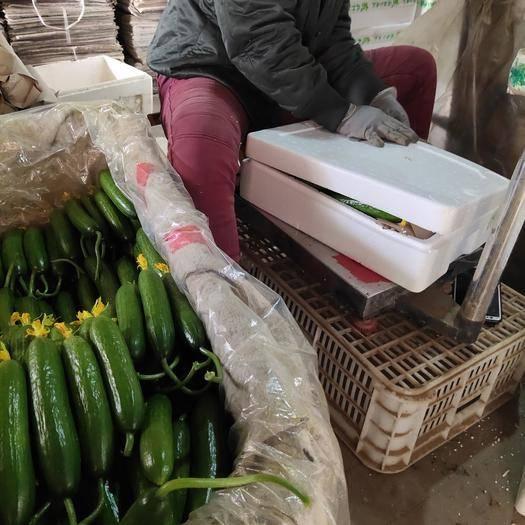 山東省濰坊市壽光市 鮮花小黃瓜
