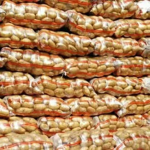 內蒙古自治區錫林郭勒盟多倫縣冀張226土豆 3兩以上