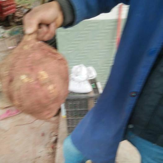 四川省綿陽市三臺縣 需要良種蔬菜苗子和紅薯種聯系