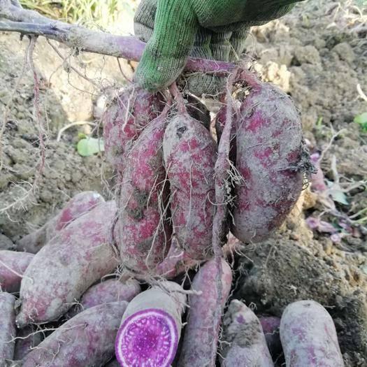 廣西壯族自治區柳州市融水苗族自治縣 廣西高寒山區紫薯