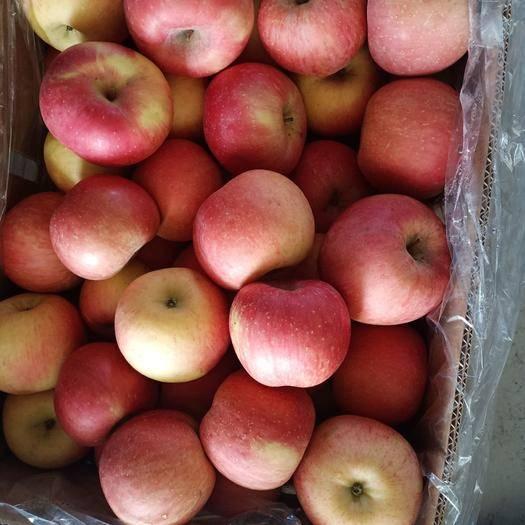 黑龍江省哈爾濱市呼蘭區紅富士蘋果 70mm以上 統貨 紙袋