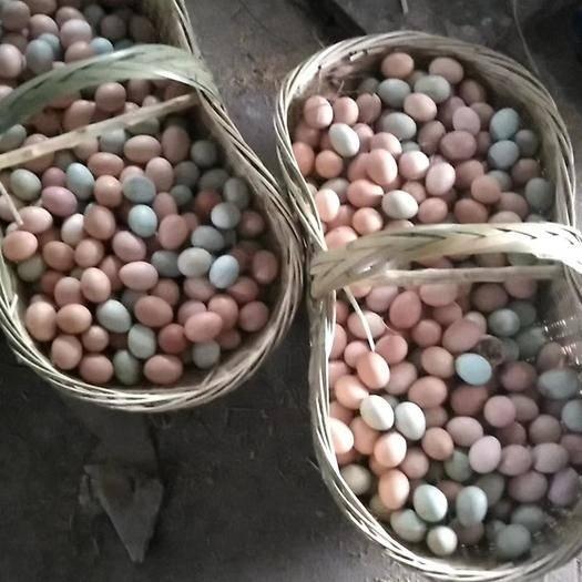湖北省武漢市蔡甸區 真正的土雞蛋