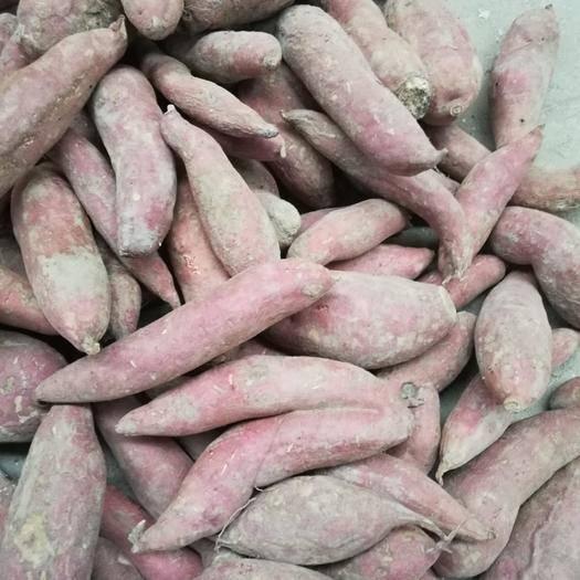 河南省開封市杞縣 紅薯西瓜紅批量低價出售