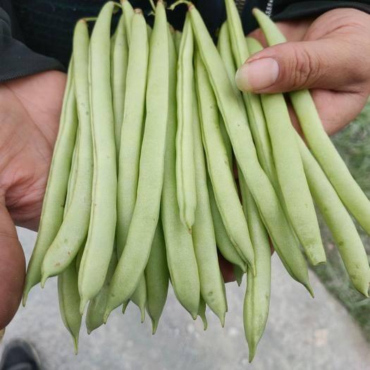 貴州省黔東南苗族侗族自治州榕江縣白不老四季豆 10cm以上