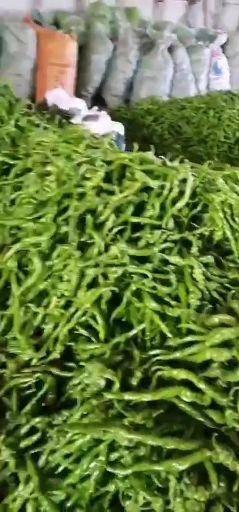 江西省贛州市信豐縣螺絲椒 20cm以上 中辣 靑色