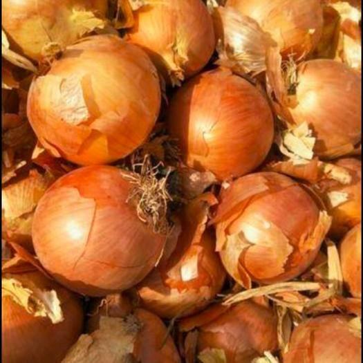 甘肅省武威市古浪縣 洋蔥黃皮洋蔥