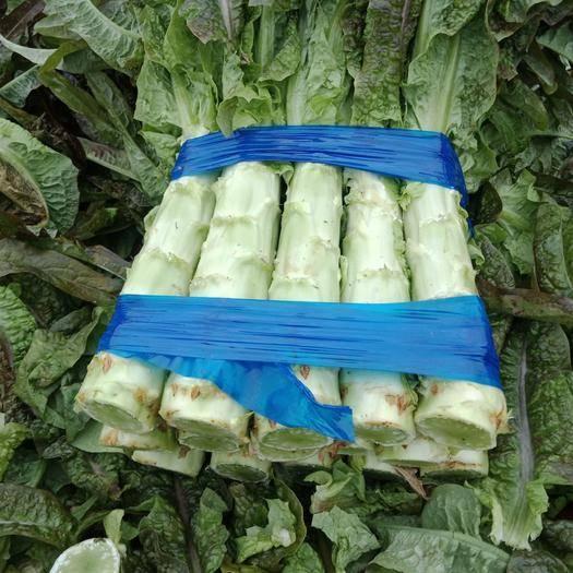 山東省臨沂市沂南縣紅葉香萵苣 1.5~2.0斤 50-60cm