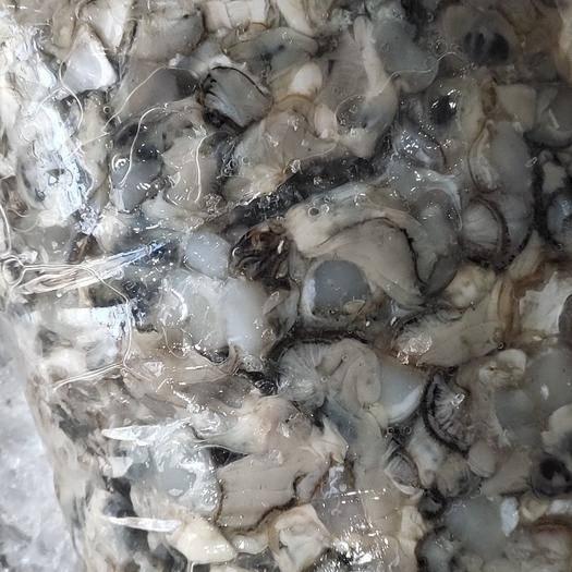 遼寧省丹東市東港市 批發朝鮮野生牡蠣肉