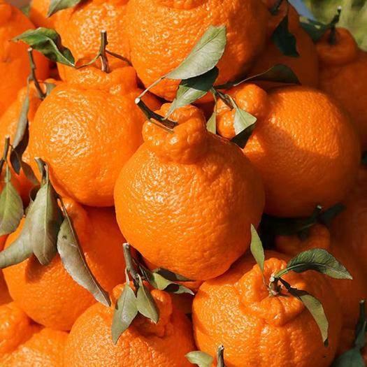 四川省成都市蒲江县 蒲江不知火丑橘丑柑橘子,一件代发商超供应