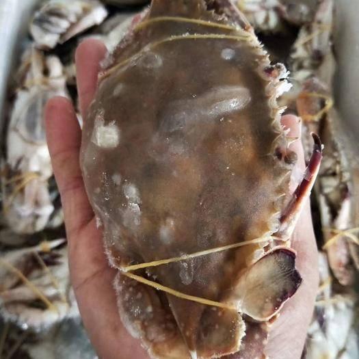 江蘇省連云港市贛榆區 梭子蟹新鮮鮮凍梭子蟹