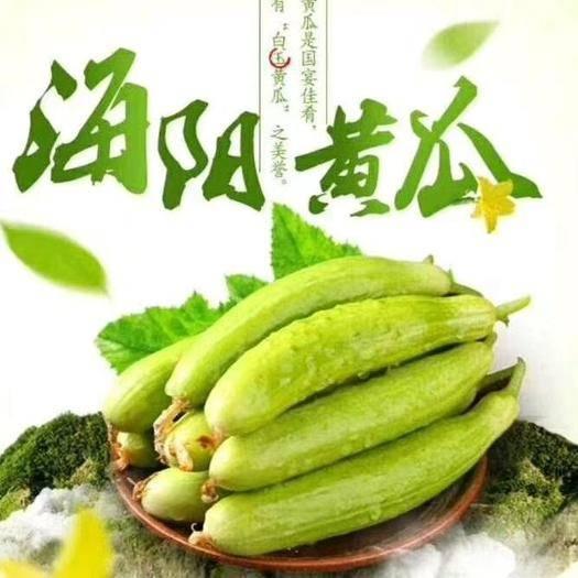山東省煙臺市海陽市 海陽白玉黃瓜 健康美容四季水果