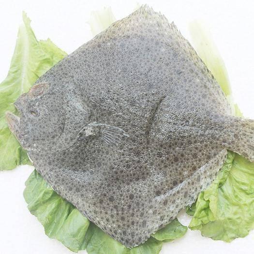 江蘇省連云港市東海縣偏口魚 海鮮特產 冰鮮多寶魚 半斤左右每條 新鮮多寶魚 鮮活海鮮批發