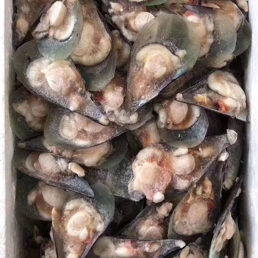 廣東省廣州市荔灣區冷凍帶子 15斤裝鮮活凍帶子開背帶子燒烤帶子約150-200只