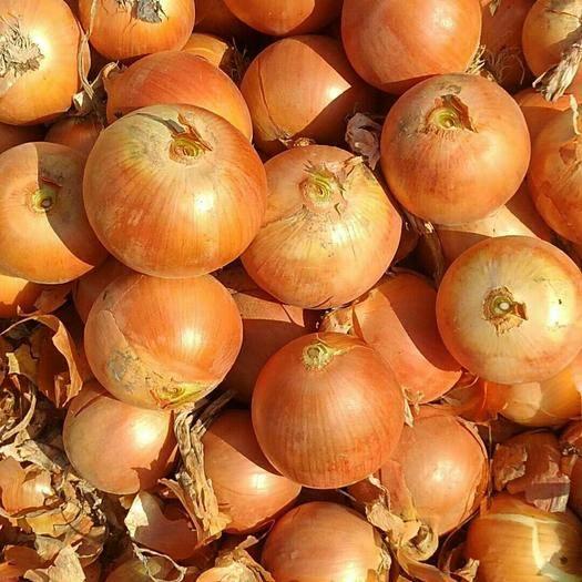 四川省成都市彭州市 甘肅精品洋蔥,黃皮、紅皮、紫皮