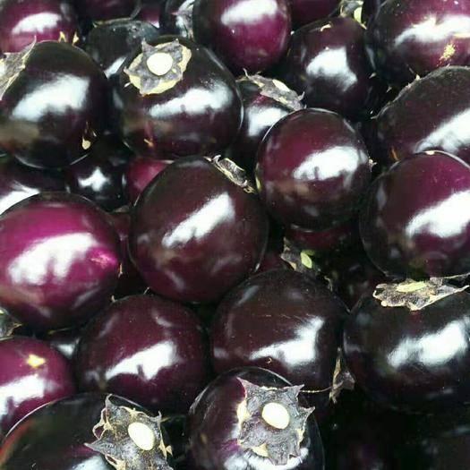 山東省聊城市莘縣紫光圓茄 圓茄精品二級可供商超市場