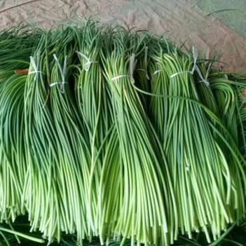 雜交蒜薹 代發全國各地市場  長年精加工蒜薹
