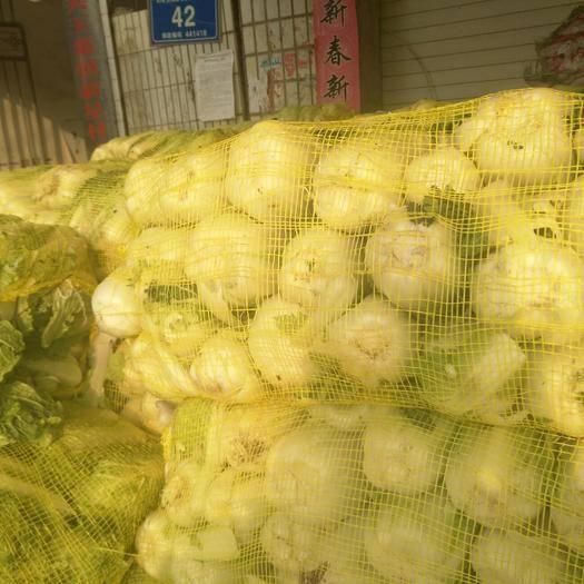 湖北省襄陽市宜城市高山娃娃菜 黃心,硬貨,保質保量,歡迎全國各地老板訂購
