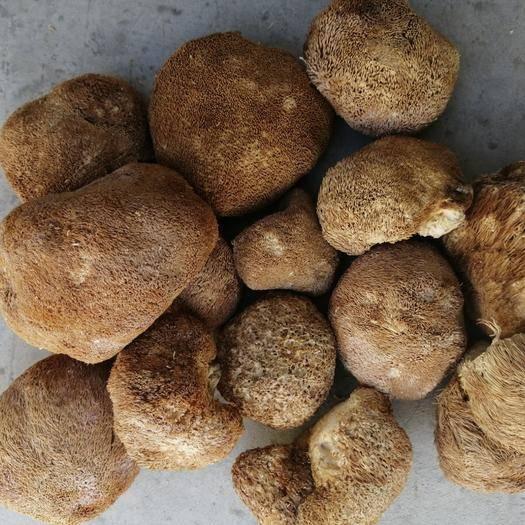 湖北省襄陽市襄州區 猴頭菇、榛蘑、黃蘑,大興安嶺特產,品質價格美麗