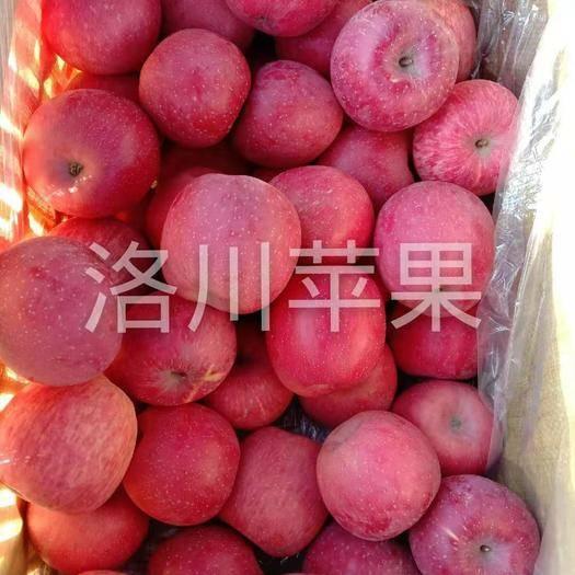 內蒙古自治區呼和浩特市回民區洛川蘋果 75mm以上 條紅 紙袋