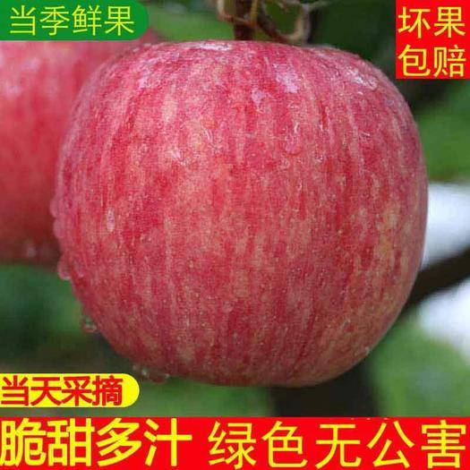【坏果包赔】红富士新鲜苹果10斤包邮 现摘现发