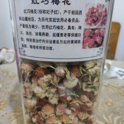 福建省三明市三元区 红巧梅花妃子红